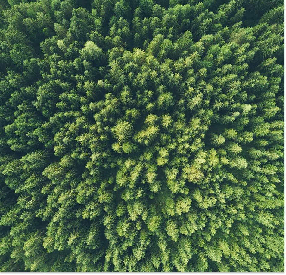 production bois durable pour maison en kit