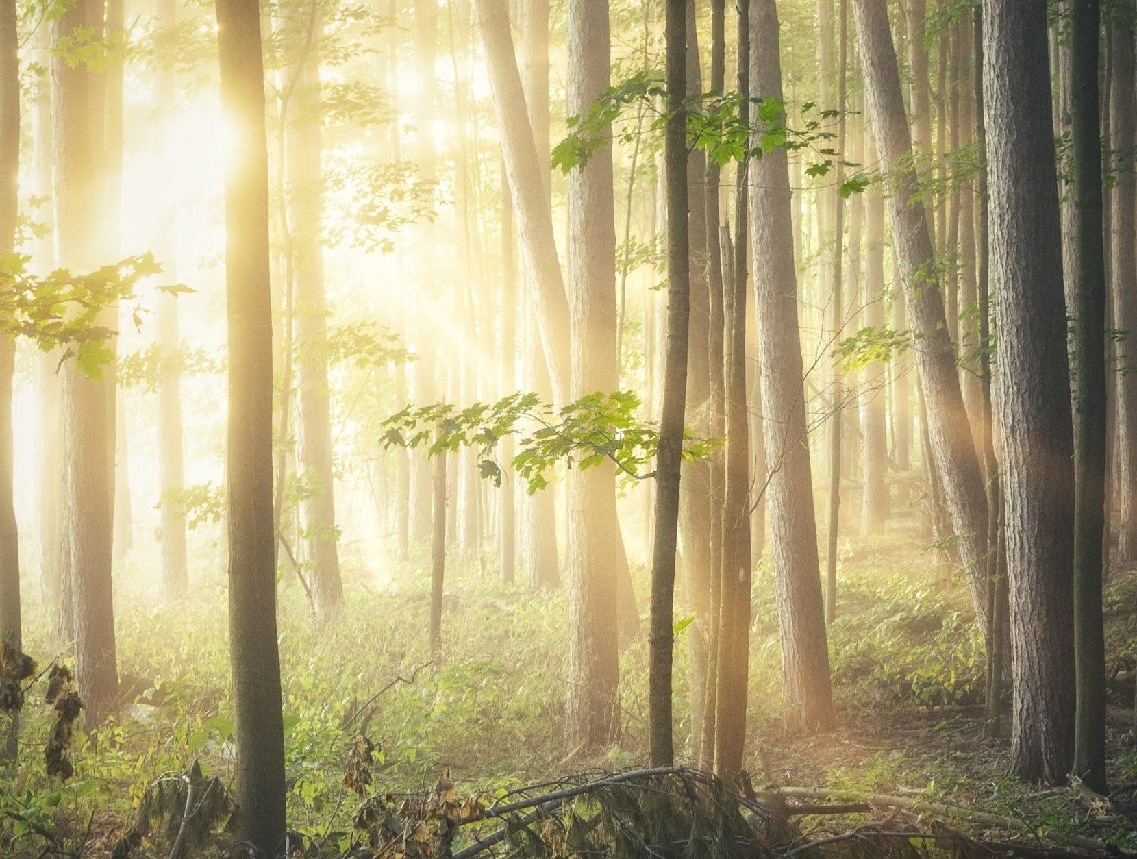 foret bois responsable et durable pour maison